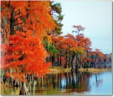 Trees With Orange by Riverside